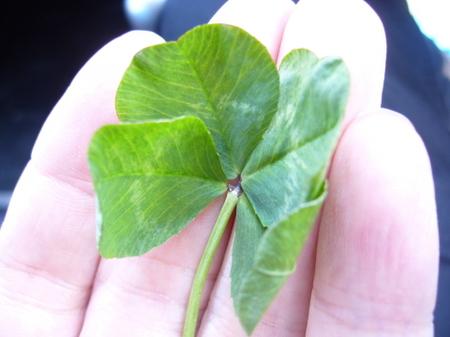 clover4.jpg